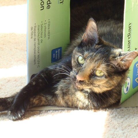 calico cat laying in a box