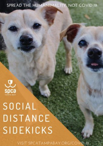 Social Distance Sidekicks, this image reads, the image is of 2 friendly looking dogs.