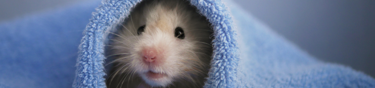 hamster featured image blog