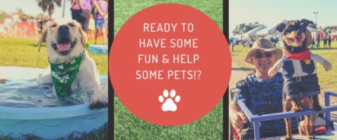 pet walk photo collage