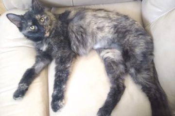 cat on sofa