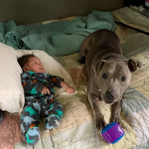 grey female dog laying next to a baby