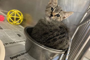 Cat sits inside a foodbowl, in a cute manner