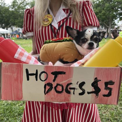 hot dog pet walk