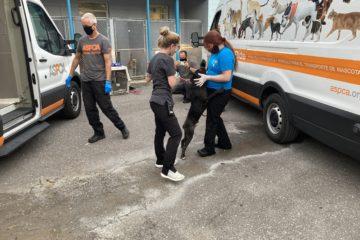 Vet Techs alongside the Vans assist an animal in need