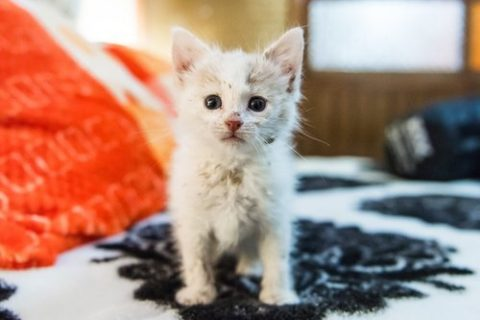young mangy kitten