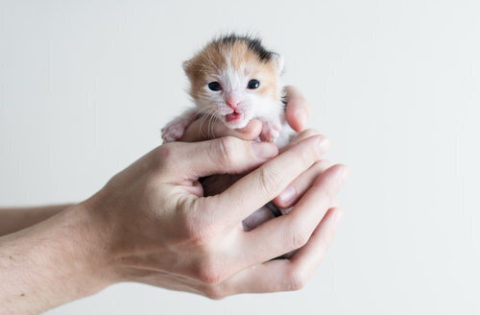 lady holding kitten