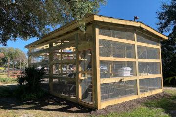 New Iguana Habitat