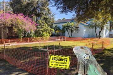 New Iguana Home