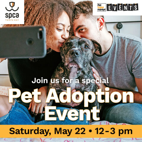pet adoption special call out