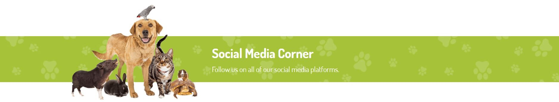 social media corner header image