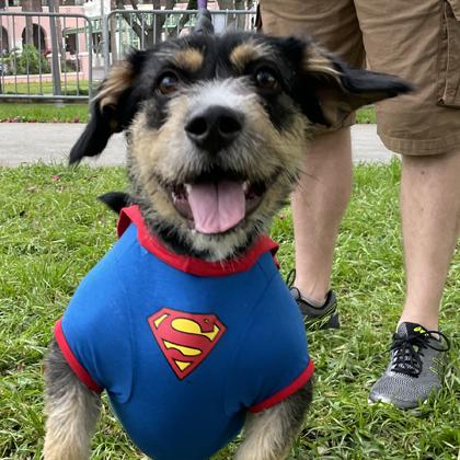 superdog pet walk
