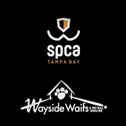 spca tampa bay vs wayside waifs